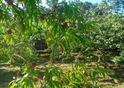 Árboles frutales - Huerta