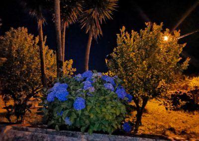 Vista nocturna jardín